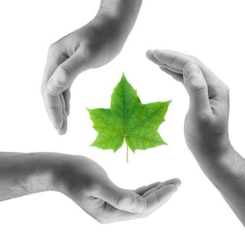 No.8 - Sustainable Development